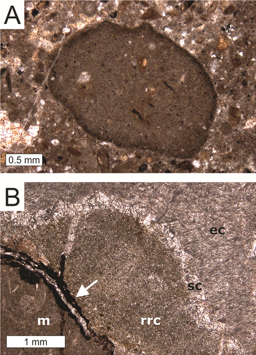 Photomicrographs of seep limestones; plane-polarized light. A: Nodule enclosed in detritus-rich micritic matrix; pyrite (dark) is enriched along the margin of the nodule. Dumanlı II deposit (Turkey) B: Terziler I deposit. Paragenetic sequence of matrix micrite (m), recrystallized rim cement (rrc) possibly representing former banded and botryoidal cement, scalenohedral calcite (sc), and equant calcite (ec). Transition from matrix micrite to recrystallized rim cement is affected by pressure solution and secondary mineralization (arrow).