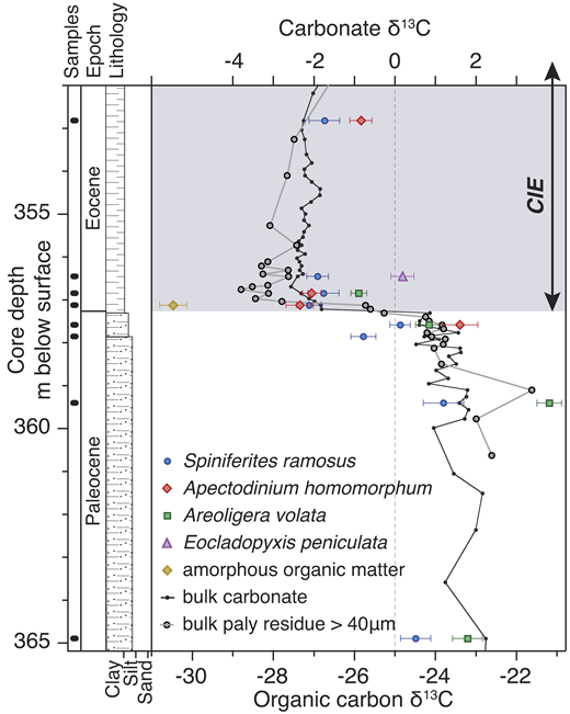 Dinocyst species-specific carbon isotope records from the Paleocene-Eocene Thermal Maximum (PETM) at Ocean Drilling Program Site Bass River, New Jersey, USA. The bulk carbonate record is from John et al. (2008), and the bulk palynological (paly) >40 µm record that dominantly comprises dinocysts is from Sluijs et al. (2007). Data points are mean values of 20–50 analyses on single specimens of Apectodinium homomorphum and Areoligera volata and 3–5 specimens of Spiniferites ramosus and Eocladopyxis peniculata. Error bars reflect 1 standard error of the mean. The δ13C scales are offset by 25‰. Values are expressed (‰) relative to the Vienna Peedee belemnite standard. CIE—carbon isotope excursion.