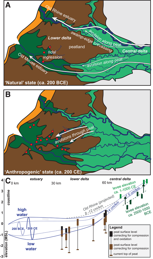 A: Simplified map of delta network in its last natural state around 200 BCE. B: Simplified map of delta network in first anthropogenic state around 200 CE. Colors are as in Figure 1; red dots indicate settlement locations. C: Reconstruction of pre-avulsion surface elevation along HIJ and Lek paths. Upstream—mapped levee elevation for two generations of natural levees (green and dark green from Pierik et al., 2017b); central—top of peat (see Data Repository); downstream—tentative tidal incursion, increasing with tidal creek progradation from 200 BCE to 200 CE (Vos, 2015). MSL—mean sea level (in m). Projected Old Rhine gradient was measured along its residual channels, after Cohen et al. (2012).