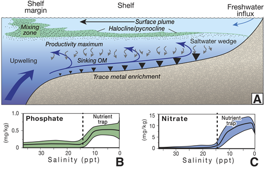 A: Model of estuarine circulation with trapping and recycling of nutrients and organic-reactive elements (OM—organic matter). Landward flow of the deep-water layer leads to progressive concentration of these elements in the saltwater wedge, a signal that can be transferred to the sediment (arrow size reflects relative sedimentary trace metal enrichment). B, C: Example of nutrient trapping (aqueous phosphate and nitrate) in the lower Amazon River estuary, Brazil (adapted from Edmond et al., 1981).