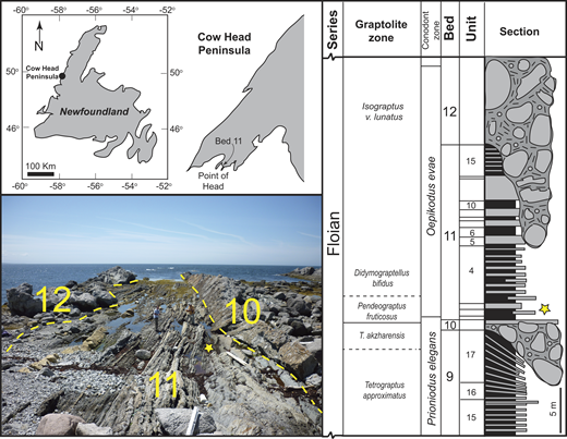 Location and stratigraphic context of sample horizon (star), Factory Cove Member (Shallow Bay Formation, Cow Head Group), Cow Head Peninsula, western Newfoundland, Canada. Log re-drawn from James and Stevens (1986).