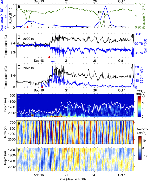 Structure of a representative typhoon-triggered turbidity current. A: Atmospheric pressure (green), rainfall (black dots), and river discharge (blue) at Gaoping River mouth (Taiwan) during three super typhoons (numbers 14, 15, and 16) in September 2016. Bottom red dot shows time (∼12:00 on 14 September) of maximal river discharge. B: Temperature and salinity (Sal) recorded by the conductivity, temperature, depth sensor. Red dot shows time (∼21:00 on 17 September) of appearance of turbidity current at 2000 m. C: Temperature and suspended sediment concentration (SSC) recorded by the recording current meter (RCM). Red dot shows time (∼12:00 on 16 September) of appearance of turbidity current at 2075 m. D: Merged SSC calculated from RCM turbidity and acoustic Doppler current profiler (ADCP) echo intensity. White line indicates boundary of SSC exceeding 0.5 mg/L. E: Full velocity of current along the canyon. F: Same as E, but with tidal velocities removed.