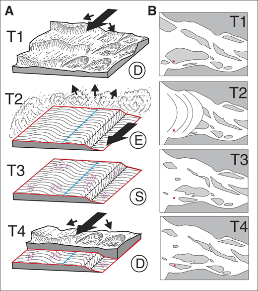 Depositional model showing development of cross-strata, bounding surfaces, and Psammichnites. A: Changing appearance of substrate at different time intervals. Large arrows show direction of sediment transport, small arrows show sediment deposition or removal from the substrate. Development of 1st-order (blue) and 2nd-order (red) bounding surfaces are highlighted. Time 1 (T1): Deposition (D) state creates cross-strata within amalgamated fluvial-estuarine dunes; potential time taken for creation of preserved sedimentary signature (TC) is minutes to hours. T2: Erosion (E) state levels and scours 2nd-order bounding surface through storm-surge wave action, with channel developing as waves recede; TC is minutes to hours. T3: Stasis (S) state permits Psammichnites organism colonization; TC is hours to years. T4: Deposition state creates overlying cross-strata, not preceded by erosion; TC is minutes to hours. B: Location of states shown in A (red box), relative to hypothetical wider estuarine environment. Spatial distribution of active subaqueous dune barforms is instantaneously shuffled between T1 and T3 in areas affected by T2 storm surge; elsewhere, barforms experience steady passage. Time duration of regional conditions: T1 = years; T2 = hours; T3 = hours to years; T4 = years.