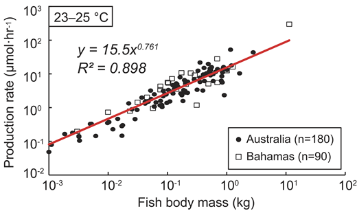 CaCO3 production rate–body mass relationship at 23–25 °C, based on data from Australia (this study) and the Caribbean (Perry et al., 2011).