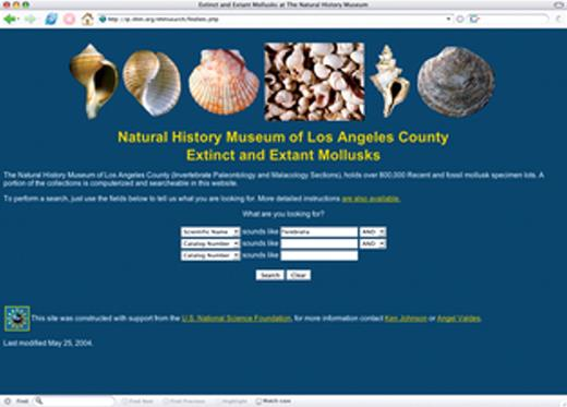 Figure 7. The Web services interface to the Department of Invertebrate Paleontology at the Natural History Museum of Los Angeles County (LACMIP) catalog has been used to construct a joint search tool for the catalogs of the Department of Invertebrate Paleontology and the Malacology Section (LACM) of the Natural History Museum of Los Angeles County. A: This search form allows researchers to locate specimens from two different data sets.