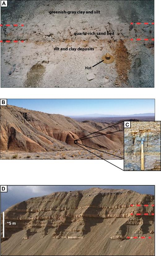 Examples of typical delta and prodelta facies of the Bouse Formation. (A) Quartz-rich pink sand bed in finer grained clay and silt beds at 365 m above sea level (asl) in Cottonwood Valley is highlighted by red dashed lines. Sand bed is on orange oxidized silt and clay beds, and is overlain by several meters of greenish clay beds (note hat for scale). (B) Exposure of thick section of interbedded mud and sand on the upper piedmont of the Dead Mountains, central Mohave Valley (light colored beds higher in section). The left base of this exposure is 315 m asl, the exposed section is ∼20 m thick, and Bouse deposits are erosionally truncated by younger fan gravel. (C) Detail of part sequence containing repeated of couplets of very fine sand and silt with massive claystone (pick is ∼30 cm long). (D) Fining-upward tan sand beds (some prominent beds highlighted with dashed red lines) in greenish-gray clay and silt deposits near Park Moabi, southern Mohave Valley. The base of the exposure is ∼170 m asl. The sand beds likely record prodelta turbidites deposited in deep water, with finer grained deposits representing the gradual settling of suspended load (after Turak, 2000).