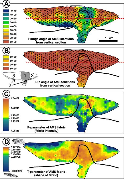 Diagrams showing the magnetic fabric of model D-19 contoured by the inverse distance weighting method using the ArcMap 10.1 software (www.esri.com). Vertical section of the model was drilled in a hexagonal grid of 1 cm with cores 0.8–1 cm long and 1 cm in diameter providing total 335 anisotropy of magnetic susceptibility (AMS) samples. A northwest-southeast elevation profile across Devils Tower is superposed over the diagrams to illustrate the match of inspected magnetic fabric with magmatic fabrics on Devils Tower (Fig. 15). (A) Plunge angle of magnetic lineations from the vertical section shows lineations perpendicular to the vertical sections in the upper part of the extrusive lobes, in contrast to the base of the model and the domain above the conduit, where these lineations are parallel to the vertical section. (B) Arrangement of magnetic foliations matches with the pattern of disrupted color banding on superposed vertical section of the model (Fig. 12D). Dip angles of all the magnetic foliations from the vertical section regularly show high values of 80°–90°. Thick red dashed line in A and B indicates a level where vertical fabrics in the walls of the tower pass to exclusively horizontal fabrics in the upper part of the model. (C) The contour diagrams of the magnetic fabric intensity. (D) The shape of magnetic ellipsoid. The domain above the conduit (domain 1) is characterized by relatively strong oblate fabric (P = 1.20–1.33) with lineations that plunge at low angles from the vertical section. The base of the coulée (domain 2) is defined by an imbricated fabric pattern consistent with lateral flow of the analogue magma from the feeding conduit and shows low intensity (eccentricity of the AMS fabric, P = 1.2–1.28) and moderately oblate shapes (shape of the AMS fabric, T = 0.2–0.82). Fabrics in the coulée above the base (domain 3) can be characterized by continuously changing shape of the fabrics from strongly prolate in shallow levels to strongly oblate in the deeper parts of the flow with magnetic lineations plunging at high angles from the vertical section. The transition between the base and interior of the coulée (the lateral flow) is marked by a narrow band of relatively intense fabrics (P = 1.3–1.32) that are highly oblate close to the conduit and moderately oblate on the frontal side of the coulée (Fig. 12D). A similar, although less expressive, pattern of fabric orientation and shape is revealed on the back side of the extrusion, where the flow was blocked by the walls of the crater.
