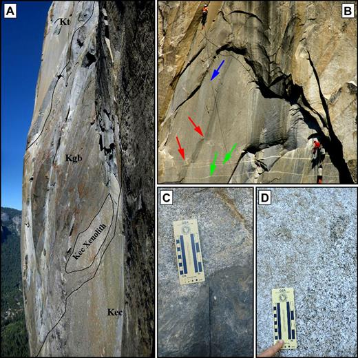 Photographs displaying intrusive relations on El Capitan. All referenced locations can be found on Figure 3. (A) Panorama taken from ∼750 m up New Dawn (Fig. 3) looking west across the tonalite of the Gray Bands (Kgb). Above the tonalite is the Taft granite (Kt), and below it is the El Capitan Granite (Kec). Note the large (∼10 m across the minor axis) xenolith of El Capitan Granite, sharp contact between the tonalite of the Gray Bands and the surrounding units, and composite nature of the unit, especially around the Kgb symbol. (B) Telephoto image of a team of climbers on the Rubber Band Man. Vertical gray-black bands in the center of the photograph are water streaks on the overhanging wall, and the black line that cuts every feature is the climbers' rope (blue arrow). Note the dextral separation in the gray dike of the Oceans that runs up and right from the lower left corner of the image (red arrows). This dike is cut by ∼10-cm-thick aplite dikes (green arrows). All dikes cut El Capitan Granite, and all contacts are sharp. Photograph courtesy of Tom Evans. (C) Photograph near the base of Tangerine Trip of the diorite of North America in sharp contact with the Taft Granite. (D) El Capitan Granite in sharp contact with Taft Granite near The Alcove. This location is part of a complex of diking between the two units.