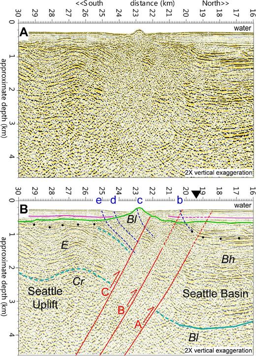 (A) Combined industry seismic-reflection profiles W25, W27, and W29 down the center of Puget Sound showing the Seattle fault zone (SFZ) separating the subhorizontal Seattle basin strata to the north from the folded and uplifted rocks of the Seattle uplift to the south. The Seattle fault zone is evident as a broad zone of disrupted, north-dipping reflectors. (B) Interpreted profile. Three thrust faults (red lines; dashed red lines are axial surfaces) can be interpreted based on reflector truncations within the Tertiary strata, with the faults dipping ∼40° to the south. Dark-blue dashed lines are the approximate locations of the backthrusts, drawn based on their surface location and the assumption that they sole into bedding planes. The synclinal axial surface extending from fault A forms the deformation front, south of which strata dip northward. The green line is the unconformity at the base of late Pleistocene and Holocene deposits, with the purple line denoting a prominent reflector within these young deposits. The black dots show the estimated location of the top of the Tertiary strata and base of Quaternary strata (based on Johnson et al., 1999); the light blue lines show estimated contacts within the Tertiary strata based on Johnson et al. (1994) and ten Brink et al. (2002). Bh—Miocene Blakely Harbor Formation; Bl—Oligocene Blakeley Formation; E—Eocene marine strata; Cr—Eocene Crescent Formation basement rocks. Black triangle is the location of the deformation front in Blakely et al. (2002) and shown as a green dashed line in Figures 1 and 4.