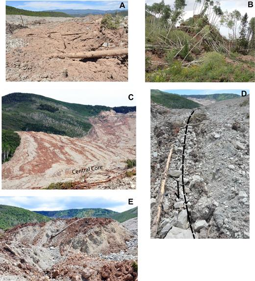 Photographs of mapped features. (A) Debris-flow deposit from movement phase 1. The visible part of the tree trunk in the foreground is about 3.5 m long. (B) Large hummock (2442 m2 area, fourth largest in West Salt Creek) on the surface of the rock-slide slump block resulting from movement phase 2. The relief visible is about 15 m. (C) Red, basalt-rich flow bands (from movement phase 3) just south of ridge 1, which is located just outside the field of view to the left (see Fig. 2A for location). Flow bands show change in avalanche movement from a northward to a northwestward direction. Headscarp is visible at upper right. The length of the rock avalanche visible (from lower left to upper right) is about 2.5 km. (D) Strike-slip fault along the western edge of the central core. The diameter of the tree trunk in the foreground is about 20 cm. (E) Hummock in the central core. Large tree trunk visible in center of image is ∼10 m long.