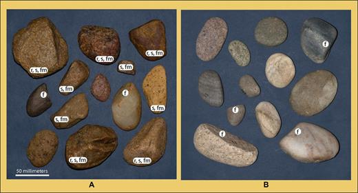 Randomly chosen gravel clasts of White Mesa alluvium and late Pleistocene gravels of San Juan River. (A) Pebbles and small cobbles from northeast paleochannel 3. (B) Cobbles from Pleistocene gravel of San Juan River in Four Corners area (Fig. 1). Labels: r—rough and pitted surface; s—asymmetric nonellipsoidal shape; f—rounded facet; fm—two or more rounded facets. Surfaces features and shape of gravel clasts in White Mesa alluvium differ substantially from those of San Juan River.