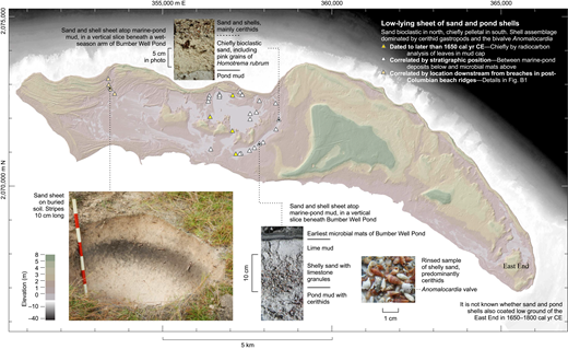 Distribution and examples of low-lying sheet of sand and pond shells.