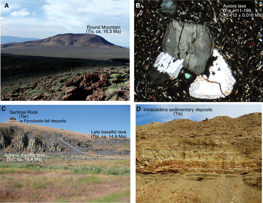 (A) Icelandite vent complex at Round Mountain; top, flat part is ∼1.3 km across. Looking west at resistant rim of dense icelandite surrounding core of less resistant scoria breccia. (B) Photomicrograph, Aurora lava (Tia, H11–199). Anorthoclase (A) phenocrysts with resorbed rims in matrix of anorthoclase laths, clinopyroxene, Fe-Ti oxides, and finely devitrified glass. Leaching with dilute HF and hand-picking removed rims for single crystal 40Ar/39Ar dating. Crossed-polarized light. Horizontal field is 2.3 mm. (C) Late basaltic lava (Tbl) banked against aphyric or very sparsely porphyritic rhyolite lava (Tar) in southeastern caldera wall at Pole Creek north of Sentinel Rock (upper left), which is a sparsely porphyritic rhyolite lava. Variably welded pyroclastic-fall deposits composed of pumice and obsidian are well exposed between the two rhyolite flows. Small cliff at left edge of photo is ∼20 m high. (D) Intracaldera sedimentary deposits (Tis) composed of generally well-bedded, variably tuffaceous sandstone, siltstone, and mudstone exposed in a hectorite pit near Thacker Pass, southern part of the caldera. Face is ∼3 m high.
