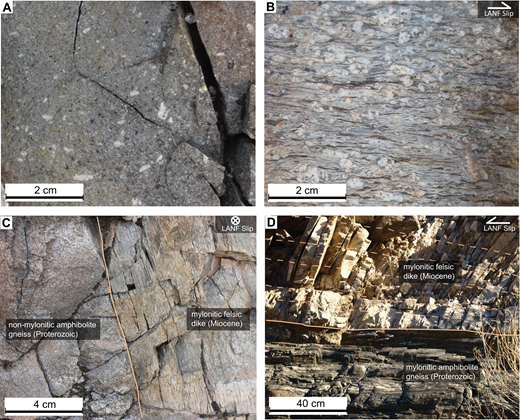 Internal fabrics of dikes adjacent to the Mohave Wash fault (MWF). LANF—low-angle normal fault. (A) Undeformed porphyritic intermediate dike in domain 2. (B) Lineation-parallel and foliation-perpendicular surface of a mylonitic felsic dike in domain 4. (C) Mylonitic dike and undeformed country rock contact in domain 4. (D) Mylonitic fabric in Miocene dike (shown with dashed lines) and gneissic country rock in domain 5.