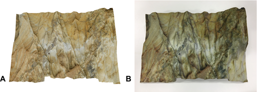(A) Rendered image of Cullercoats, UK, rock-outcrop 3D model generated by the SIROVision process; (B) final 3D printed model. Original rock-face model courtesy of Klaus Gessner (Baker et al., 2008).