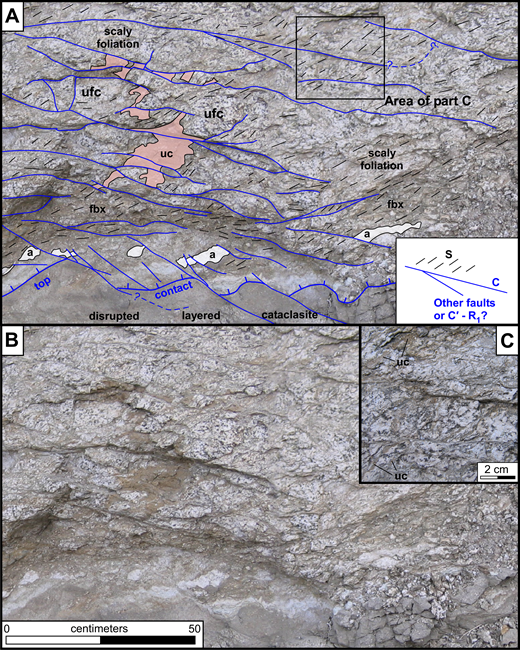 (A) Outcrop map of representative part of the NE flank of the outcrop antiform (view to NE). S–C composite fabric (inset) affects rocks above the top contact (blue lines with tick marks). Traces of S-foliation, which is variably developed and wraps around outsized, unfoliated quartz diorite clasts (ufc), are shown by short black lines; traces of C-planes are shown by blue lines. See text for discussion of small faults cutting the top contact. Ultracataclasite (uc, pink overlay color) occurs in irregular bodies that commonly terminate against C-planes, suggesting they may have been generation surfaces. A dismembered and attenuated aplite dike (a) is shown by white overlay; fbx—foliated breccia. (B) Same photo as (A), without lines. (C) Detail of S–C foliation (area shown in A), showing ultracataclasite lenses parallel to, and presumably injected into, S-foliation.
