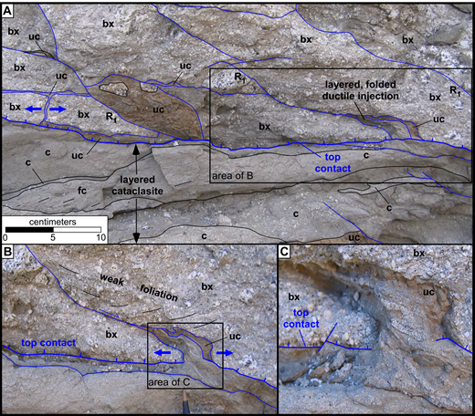 (A) Detail of structural relationships along top contact on the SW flank of the outcrop antiform (view to SW). Cataclasite (c) and foliated cataclasite (fc) layers of different grain sizes (separated by thin black lines) are truncated by the top contact at an acute angle, unlike most of the length of the top contact. Primary Reidel shears (R1) cut poorly sorted breccia (bx) above the top contact. One of these opened a pull-apart gap. Ductile (folded) cataclasite layers were injected across the top contact, into the pull-apart, and truncate the top contact. On the left, ultracataclasite (uc) is present along the top contact and a parallel fault above it (one or both presumably being generation surfaces) and was injected across the extended breccia layer (between heavy blue arrows). A large body of ultracataclasite (left of box) probably also is an injection. (B) Detail of Reidel shear that opened the pull-apart (area shown in A). Weak cataclastic foliation formed near a Reidel shear shows normal drag. Tip of pen for scale. (C) Detail of folded cataclasite layers in the pull-apart. Layers can be traced across the top contact, showing that injection occurred during the final slip event. The ultracataclasite body at the top of the pull-apart also may have been injected or may have formed along the Reidel shear before the pull-apart opened.