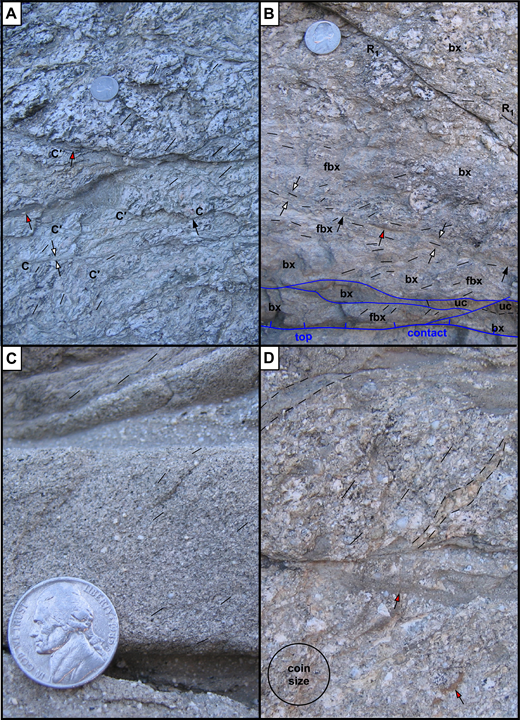 Cataclastic foliation types. Coins are 2 cm in diameter. Red-filled arrows point to ultracataclasite lenses; white arrows show width of granular to foliated shear zones; black arrows show sharp shear planes; thin black lines show traces of foliation. (A) Composite S–C–C′ fabric above NE-flank top contact. Many outsized clasts remain, and maximum grain size commonly is similar to protolith quartz diorite. (B) Foliated (fbx) and brecciated (bx) quartz diorite above SW-flank top contact. Some outsized clasts remain, but overall grain size is more strongly reduced and more even than on NE flank (A). Arrows show basal part of a primary Reidel shear that is ornamented by ultracataclasite (red arrows), approaches parallelism with top contact, and changes laterally from a foliated shear zone of finite width (white arrows) to a sharp plane (black arrows). Base of upper plate is a thin, fault-bounded, heterolithologic unit of breccia, foliated breccia and ultracataclasite (uc) above the top contact. Location shown in Figure 8B. (C) Weakly developed S-foliation in a medium-grained cataclastic layer, at ~45° to top and bottom boundaries of the layer. The boundaries are thinner, fine-grained recessive cataclasite layers, which probably equate to C-planes. At top of photo, thin layers (one is also foliated) are truncated downward against the upper, bounding, recessive C-plane. (D) Top is a coarse-grained cataclastic layer that contains thinner layers of finer-grained cataclasite within it, as well as a weak foliation similar to that in (C). A thin layer of ultracataclasite on the left is truncated at both ends, and the lower coarse-grained layer contains flattened clasts of ultracataclasite (lower right).