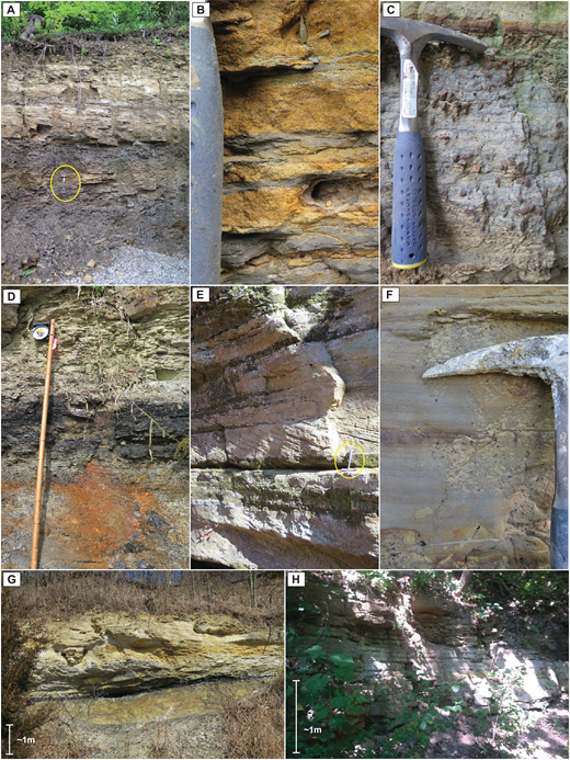 Outcrop photographs of Type 1 sandstone localities. Forest City Basin: (A) Thin-bedded sandstone overlying mudstone at FCB-A1 (note hammer for scale); (B) tidal rythmites at FCB-A1; (C) bioturbated tidal rhythmites at FCB-A1; (D) thin-bedded sandstone overlying coal and siltstone at FCB-D1; (E) planar tangential cross-bedding at FCB-D3 (note hammer for scale). Illinois Basin: (F) tidal rhythmites at IB-M1; (G) two fine-grained sandstone bodies separated by a coal horizon at IB-M1; and (H) thin-bedded sandstone at IB-AD.