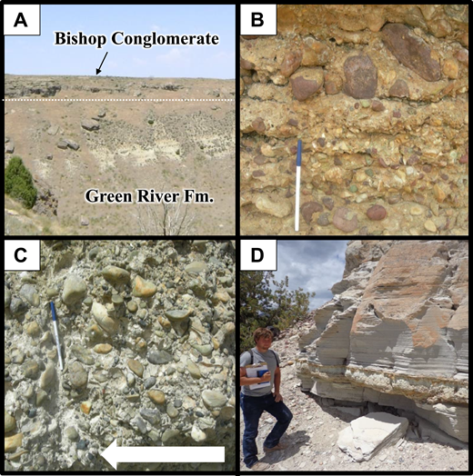 Bishop Conglomerate and Browns Park Formation field photographs from southwestern Wyoming and northeastern Utah. (A) Well-cemented, horizontally bedded Bishop Conglomerate overlies gently dipping strata of the Eocene Green River Formation at Firehole Canyon (location FC in Fig. 4). Thickness of the Bishop Conglomerate outcrop is ~5 m. (B) Outcrop photograph of UMG (Uinta Mountain Group) facies at Firehole Canyon showing abundant reddish sandstone cobbles eroded from outcrops of the Neoproterozoic Uinta Mountain Group (pen for scale). (C) Outcrop photograph of FC facies at Firehole Canyon. Clasts are chiefly rounded quartzite and imbrication shows paleoflow direction (white arrow) from right to left in the photograph (pen for scale). (D) Thinly bedded to laminated vitric tuff in the Taylor Flat area of western Browns Park (location TF in Fig. 3B). Bedding indicates that the tuff is reworked and probably accumulated in standing water (person for scale).