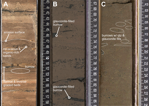 Representative core photos from fine-grained bottomset deposits. Scales are in centimeters. (A) From sequence m5.8 (core 313-28-A-155-1-1), tan-colored thin-bedded succession with alternating stratified and bioturbated intervals (type 1 fine-grained facies). (B–C) Bioturbated clayey silt from sequence m5.45 (core 313-29-A-183-1-1) with in situ glauconite in burrow fills (B), and bioturbated clayey silt from sequence m5.7 (core 313-29-A-204-1-1) (C), both type 2 fine-grained facies. qtz—quartz.