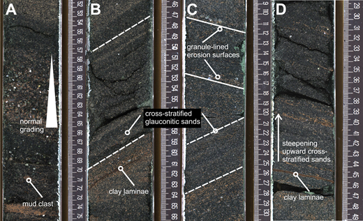 Representative core photos from coarse-grained bottomset deposits interpreted as turbidites. Scales are in centimeters. (A) From sequence m5.45 (core 313-28A-118-2), normal grading in a very coarse to fine glauconite sand bed interpreted as a turbidite. (B) From sequence m5.45 (core 313-28A-118-1), moderately sorted glauconitic medium sand cross-beds. (C) From sequence m5.45 (core 313-28A-119-1), moderately sorted glauconitic medium sand cross-beds. Note the changes in grain size and apparent change in cross-bed dip direction (dashed lines to pick out laminae), interpreted to indicate dune-like bedforms, possibly with different migration directions. (D) From sequence m5.45 (core 313-28-A-118-2-1), moderately sorted glauconitic medium sand cross-beds. Note apparent steepening-upward trend in dip of cross-stratification with clay-rich interlamination indicating episodic migration of a dune-scale bedform.
