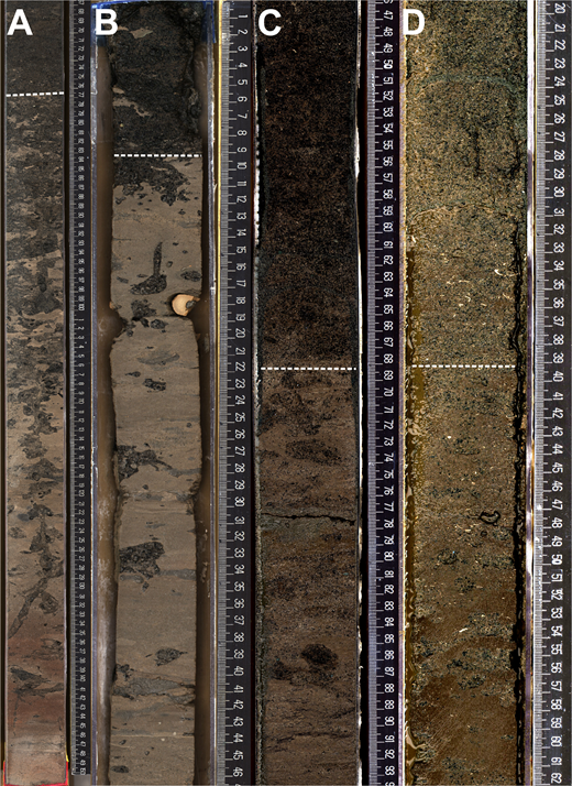 Representative core photos from basal contacts (dashed lines) of coarse-grained bottomset deposits. Scales are in centimeters. (A) Base of sequence m5.7 (core 313-28-A-152-1-1). The overlying medium sand (65–76 cm) increases in the proportion of glauconite downhole (2%–20%) to an intensely bioturbated contact (at 76 cm) with silty clay. Burrows in clay are filled with glauconite sand, including a large vertical burrow with sharp scalloped margins and multiple branches identified as Thalassinoides and Ophiomorpha. (B) Base of sequence m5.7 (core 313-29-A-208-1-1), showing a sharp contact (at 9 cm) between dark green-brown glauconite sandstone above and pale brown clayey silt below. Glauconite sand-filled Thalassinoides burrows are in the underlying clayey silt. This surface is interpreted as an unconformity. (C) Candidate m5.4 sequence boundary (core 313-28-A-113-1-1, 49–91 cm). Poorly sorted fine glauconite sand (40%) bounded below by a sharp surface (at 68 cm) above a claystone with burrows filled with glauconite sand from above (68–88 cm). Firmground required some time to be formed before sand deposition. (D) Candidate sequence boundary at Site 29 (core 313-29-A-167-2-1, 34–39 cm), above the m5.3 sequence boundary, marked by a sharp contact between bioturbated silt below and glauconitic fine sand with large angular clasts of the bioturbated silt above.