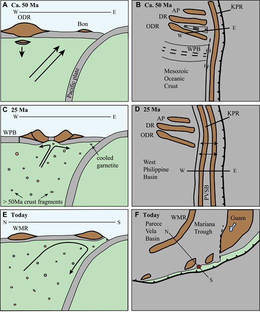 Schematic diagrams illustrating the potential origin of the crustal rocks discussed in this paper. (A), (C), and (E) represent cross sections along lines illustrated on schematic maps (B), (D), and (F). Brown areas illustrate arc crust; basaltic crust originating in a subduction initiation, backarc, or mid-ocean ridge setting is gray; mantle is illustrated in light green. The dashed line in (F) is the West Santa Rosa boundary fault. AP—Amami Plateau, DR—Daito Ridge, ODR—Oki-Daito Ridge, WPB—West Philippine Basin, MOC—Mesozoic oceanic crust, KPR—Kyushu Palau Ridge, WMR—West Mariana Ridge, PVSB—Parece-Vela and Shikoku basins, Bon—early-arc boninitic crust. The red star illustrates the location of the Shinkai 6500 dive sites 6K1232 and 6K1236, which were on a lithospheric block consisting of Eocene crust underlain by more recently emplaced mantle. The AP-DR-ODR area consists of Mesozoic arc terranes, plume-related ocean islands, and basins of late Mesozoic and Eocene age (see Ishizuka et al., 2013; Arculus et al., 2015). MOC probably consisted of oceanic lithosphere with minor arc and ocean-island terranes. Izu-Bonin-Mariana (IBM) plate rotations over time are not illustrated. (A, B) Early-arc phase shortly after initiation of subduction when upwelling mantle might have triggered delamination of deep segments of a crustal terrane, such as the Oki-Daito Ridge. (C, D) Rifting at 25 Ma to create the Parece-Vela and Shikoku basins, causing disaggregated fragments of delaminated crust to rise to shallow levels in the mantle. The dots with varied colors represent fragments of the crust, which could have varying metamorphic grade. (E, F) The situation today, where mantle with embedded crustal blocks crop out near the Mariana Trench.