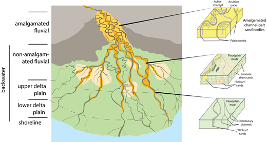 Generalized schematic to illustrate the typical channel-belt styles within the backwater zone. The backwater zone consists of non-amalgamated ribbon-like sand bodies or channel belts and associated crevasse splay deposits that transition downdip to low-gradient anastomosing channel belts and distributary channels. The backwater zone of fluvial sedimentation is composed of channel belts encased in floodplain muds and is typically associated with high subsidence and greater preservation potential. Modified from Blum and Törnqvist (2000).