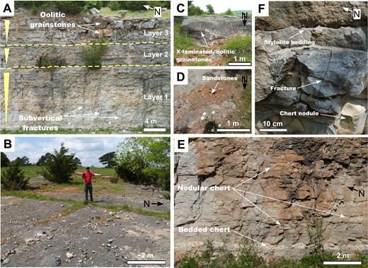 Outcrop photos illustrating the types of fractures and lithologies in the quarry. (A) View of the east quarry wall exposing the three lithological layers. (B) Conjugate fractures on top of the south wall are exposed in plan view. (C) Cross-laminated oolitic grainstone exposed on the east wall is diagnostic of layer 3. (D) Sandstones exposed on top of east wall unconformably overlying the oolitic grainstones suggesting the presence of a sequence boundary. (E) View from the north wall exposing bedded and nodular chert occurrence, diagnostic to layer 1. (F) Horizontal stylolite bedding is commonly observed in cherty layer 1. These may act as flow barriers. Vertical, healed, and confined fractures are commonly observed in between the two layers bounded by stylolite bedding.