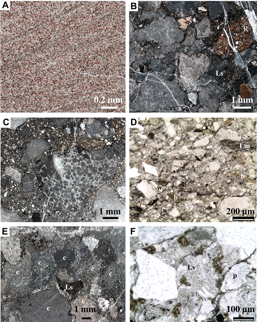 Dillinger subterrane lithologies: (A) Post River Formation: cross-laminated, very fine-grained quartz-dolomite sandstone; common plagioclase feldspar grains are stained pink. (B–D) Terra Cotta Mountains Sandstone: calcareous pebbly sandstone with diverse sedimentary lithic clasts (B, C), including radiolarian chert (R), dark mudstone (Ls), and oncoid grainstone (large clast in C), and fine- to medium-grained sandstone (D) with angular grains of monocrystalline quartz, metamorphic lithic clasts (Lm), and abundant biotite (b) and white mica (w). (E, F) Barren Ridge Limestone: conglomerate (E) with diverse carbonate clasts (c) and some clasts of dark mudstone (Ls), and medium-grained sandstone (F) with volcanic lithic clasts (Lv), monocrystalline quartz (white grains), and plagioclase feldspar (p). A–C and E are thin section scans; D and F are photomicrographs.