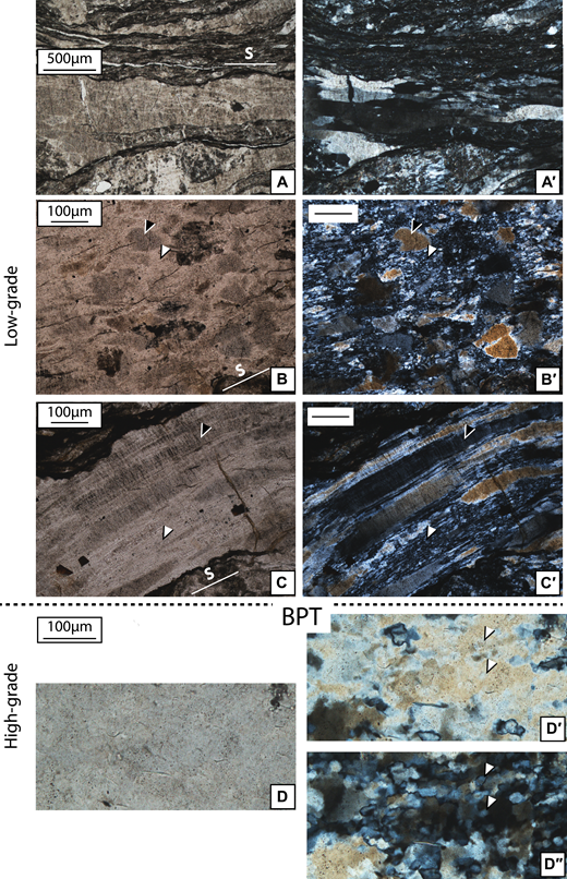Quartz vein deformation microstructures across the temperature gradient, from Hyuga Tectonic Mélange (HTM) (A-A′–B-B′–C-C′) to Foliated Morotsuka (FM) (D-D′-D″). (A-A′) In HTM, most of the vein quartz is not recrystallized and contains a very high number of fluid inclusions. (B-B′) Locally recrystallization occurs to form fine-grained aggregates (white arrow) with serrated grain boundaries, with a much lower fluid-inclusion abundance than in inherited grains (black arrow). (C-C′) In strained domains, deformation results from microfracturing and pressure solution, as illustrated on a former microfracture, decorated with fluid-inclusion planes (black arrow), along with recrystallization (white arrows). (D-D′-D″) In Foliated Morotsuka (FM), at higher temperature, recrystallization is ubiquitous, and former large grains are replaced by misoriented subgrains (such as shown by the white arrows). S stands for the trace of the schistosity. Samples HN200 (A-A′), HN77 (B-B′ and C-C′), and HN196 (D-D′-D″). Optical microphotographs without (A-B-C-D) and with (A′-B′-C′-D′-D″) crossed nicols. In D″, the orientation of polarizer and analyzer was rotated ∼45° with respect to D′. BPT—brittle-plastic transition.
