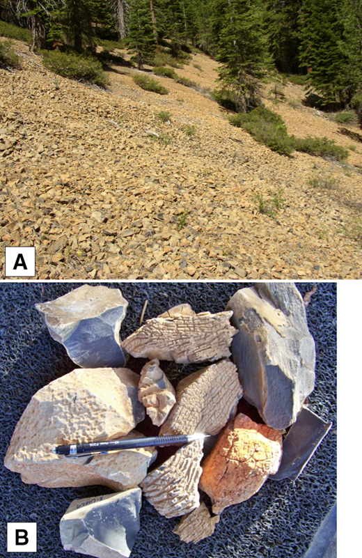 Hydrovolcanic breccia of unit Qtf in upper part of Jack Pine Canyon (Fig. 2). (A) Pervasively fractured flow breccia forms southwest-facing slopes. Cobble-sized, angular fragments are composed of glassy trachyandesite with palagonitized broken surfaces. (B) Alligator-skin and hob-nail textures of trachyandesite breccia fragments, all collected from locality in section (A) above. Surfaces of breccia fragments are palagonitized. Broken pieces expose black, glassy interiors. Note the distinctive yellow-orange color of these surfaces that contrasts with reddish oxidized basalt cinders.