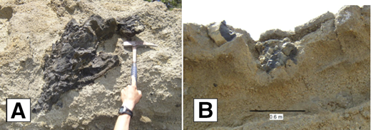 Volcanic bombs in Skylandia Beach tuff: (A) large fluidal juvenile bomb in tuff ∼0.8 m in length. (B) Radially fractured bomb forming major sag structure in underlying tuff beds.