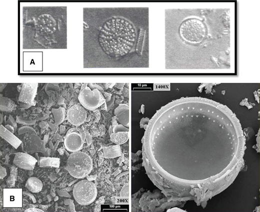 Scanning electron microscope (SEM) photomicrographs of diatoms from lacustrine sediments (A) Tertiarius (possibly Pliocaenicus) from diatomaceous sediments at Skylandia Beach (each fossil 100 μm across; after Starratt, 2005). (B) Both images Pliocaenicus? from lacustrine sediments, Jack Pine Canyon (courtesy of John McCormack, Microbeam Laboratory, University of Nevada, Reno).