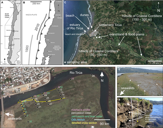 (A) Overview and (B) location of Tirúa in central Chile, showing coast-parallel rupture zones of the 2010 and 1960 earthquakes. (C) Satellite image (Google Earth, 2015) of Tirúa locality and surrounding environments. (D) Sampling locations on satellite image (Google Earth, 2015) on the river floodplain, which (E) was covered a by gray sand sheet after the tsunami impact in February 2010 (gray arrows mark the landward direction of bent grass) and which (F) contains different sand intercalations partially eroded by the Rio Tirúa, as indicated by horizontal scour lines within the river marsh sediments along the riverbank.