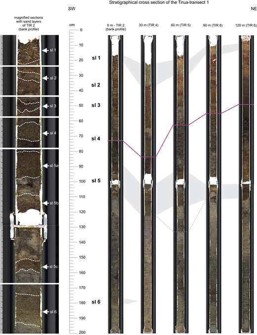 Cross section of the cores (first 2 m) along transect 1 (from riverbank to 120 m landward distance) on the river floodplain, correlating the sand layers (sl) intercalated in the river marsh sediments. The gray shading between the cores represents the correlation of these sand intercalations, whereas the purple line represents the boundary of unoxidized river sediments for orientation in increasing depths. It needs to be noted that due to the lack of geochronological data for the landward cores, not all sand layers can be correlated unambiguously. The dotted lines and light-gray shading represent additional potential correlations.