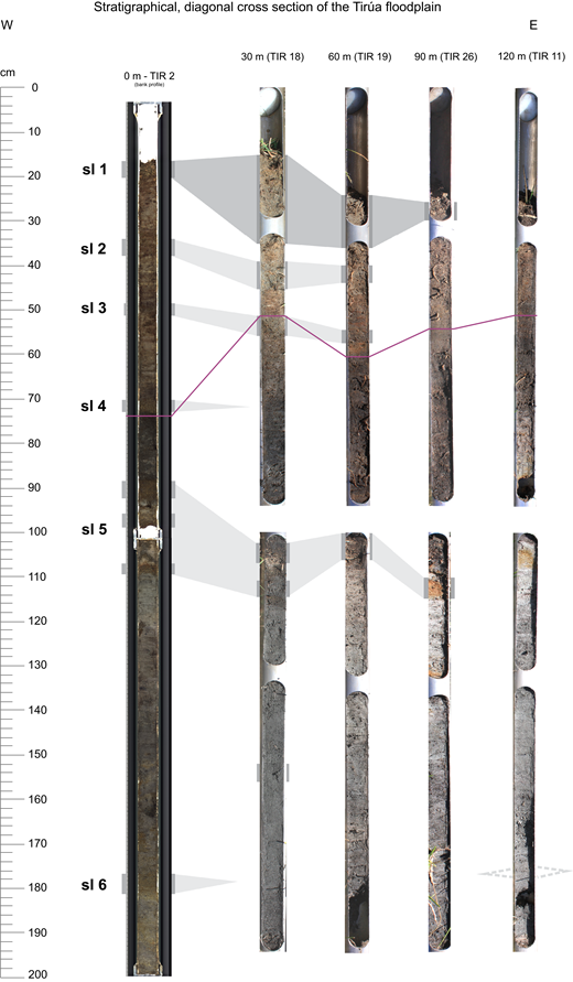 Diagonal cross section of the cores (first 2 m) of the core grid (from riverbank to 120 m landward distance) on the river floodplain. The gray shading between the cores represents the correlation of the sand layer (sl) intercalations, whereas the purple line represents the boundary of unoxidized river sediments for orientation in increasing depths. It needs to be noted that due to the lack of geochronological data for the landward cores, not all sand layers can be correlated unambiguously. The dotted lines represent additional potential correlations.