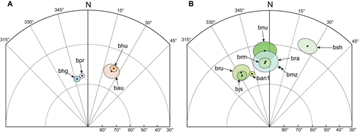 Part of a lower-hemisphere equal-area stereographic projection displaying average unit mean directions of remanent magnetization and ovals at 95% confidence of paleomagnetic directions measured for (A) bhu (280.4 ± 6.5 ka) and age equivalent bau and bhg (376.1 ± 5.7) ka and temporally proximal bpr (372.5 ± 9.8 ka); and (B) bsh (188.3 ± 4.2 ka), undated bru and bjs, ban1 (136.7 ± 5.3 ka), brm (134.4 ± 7.5 ka), undated bra and bmz, and bnu (129.0 ± 8.2 ka).