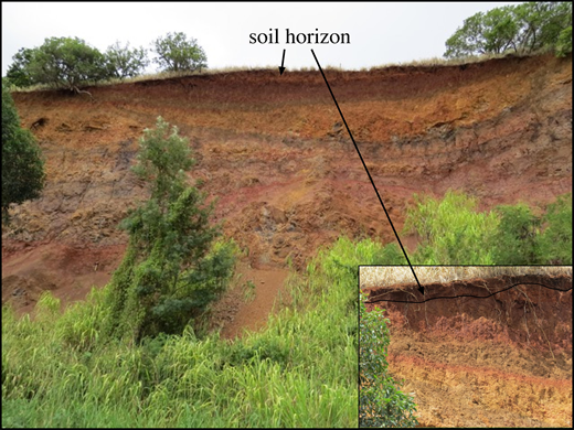 Example of a deep section (∼20 m [from vegetation to top of the cliff]) of laterite on the Wheeler Army Airfield base in central Oahu, Hawaii (599201 m E, 2374520 m N, Universal Transverse Mercator Zone 4Q; North American Datum 1983). Exposed outcrop was cut by an old army runway. Note the sharp boundaries, many of which define lenticular bodies reflective of primary igneous stratigraphy.