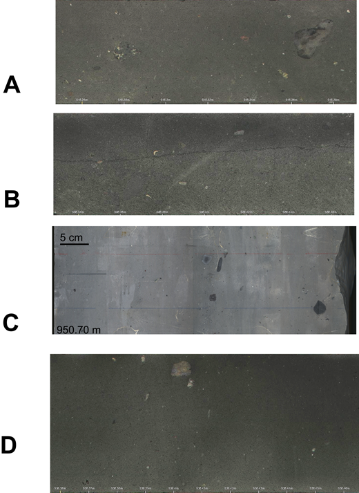 Composite Sequence 3 lithologies showing (A) diamictite, (B) boxwork fractures, (C) unwrapped whole core image of shells in sandstone (950.70–951.22 m), (D) mudstone with dispersed clasts.