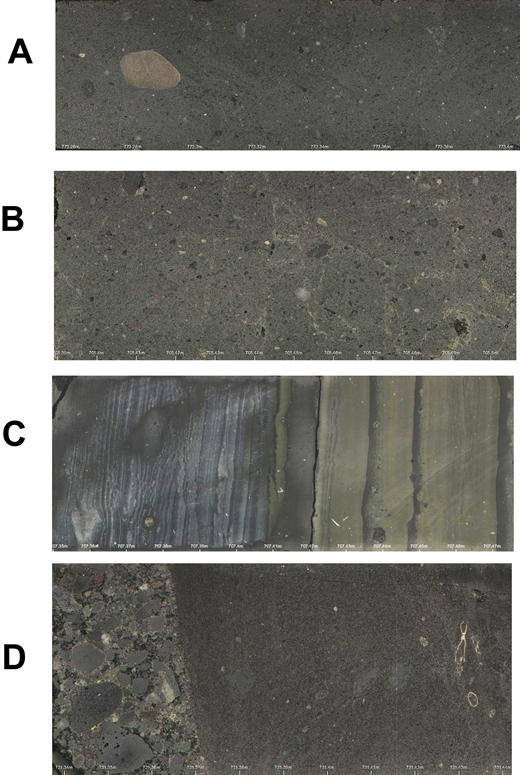 Composite Sequence 5 lithologies showing (A) clast-poor, sandy diamictite with rounded clast, (B) boxwork fractures, (C) conglomerate overlying shelly sandstone, (D) mm-bedded mudstone with dropstones.