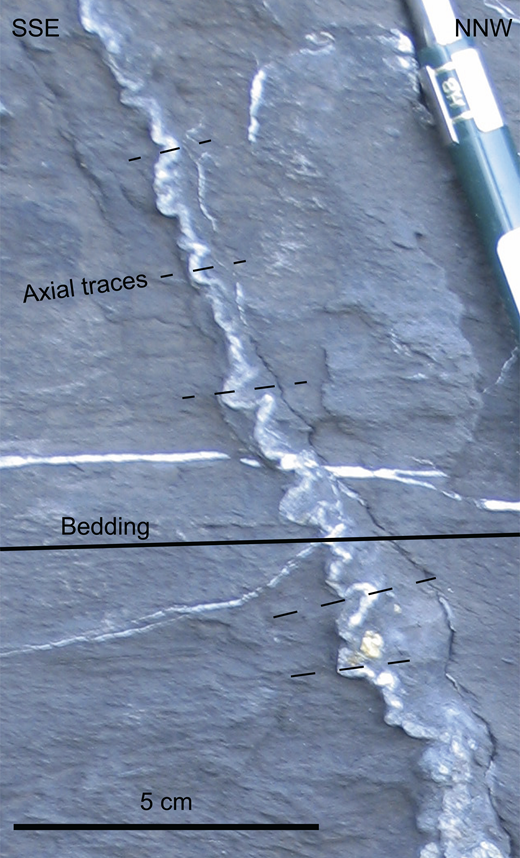 Veins folded by millimeter- to centimeter-scale recumbent folds for which the axial planes are approximately parallel to bedding.