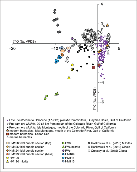 Cross-plot comparing δ18O and δ13C values from barnacle fragments (large colored circles and gray diamonds) and <45 µm micrite (colored triangles) in the Blythe basin against barnacle fragments from the modern Salton Sea (red boxes), Isla Montague (orange stars), and marine barnacles from previously published sources (white circles). Published marine barnacle data were compiled from Smith et al. (1988), Craven et al. (2008), and Detjen et al. (2015). The δ18O and δ13C values from pre-dam-era Mulinia specimens from Isla Montague and from other locations up to 65 km away from the mouth of the Colorado River (small black and gray circles, respectively; Rodriguez et al., 2001; data provided by D. Dettman), as well as δ18O and δ13C values from late Pleistocene and Holocene (17–2 ka) planktic foraminifers from the Guaymas basin (small purple circles; Keigwin, 2002; data provided by L. Keigwin), are plotted for context. Symbols and respective colors for Blythe basin barnacle values match locations outlined in the Supplemental Materials (text footnote 1). VPDB—Vienna Pee Dee Belemnite. No δ18O values were corrected for mineralogical or vital effects.