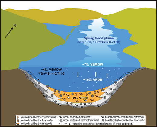 "Conceptual diagram of the ""saline lake–freshwater plume"" model. View is to the north, mimicking a view from Hart Mine Wash toward Parker (see Fig. 1). Ostracodes calcified their valves in a mildly brackish and evaporative lake with elevated δ18O values (shown in black text within water column), a high 87Sr/86Sr ratio, and variable δ13C values (not shown). The water-ostracode and water-micrite δ18O relationship (VPDB) was calculated for water at 20 °C (benthos) and 30 °C (epilimnion), respectively, using Friedman and O'Neil (1977), and includes a +2‰ vital effect correction for the ostracode calcite (Marco-Barba et al., 2012). VPDB—Vienna Pee Dee Belemnite, VSMOW—Vienna Standard Mean Ocean Water. Micrite forms during a spring/summer freshwater plume and has much lower δ18O values and a lower 87Sr/86Sr ratio than carbonate formed deeper in the lake. Ostracode δ13C values (see Fig. 10) can depend on whether they were living in 12C-enriched bottom waters (low δ13C values) or not (Decrouy et al., 2011a, 2011b). See text for discussion. See Figure 5 for the relationships among 87Sr/86Sr ratios in micrite, fish bone, and ostracode calcite. Artwork is based on Young (2004)."