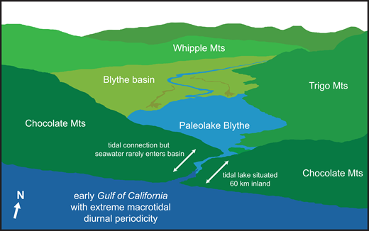 Cartoon illustration of a hypothetical tidally influenced lake scenario for paleolake Blythe based on a scaled-up analogy to the Lake Waihola-Waipori complex in New Zealand. See text for discussion. Paleolake Blythe is shown at or near sea level, with an outflowing stream connecting the lake to the early macrotidal Gulf of California. Discharge on the outflowing river is impeded during high tides, causing the lake level to rise. Discharge resumes during low tides and lake level falls. Paleolake Blythe is fed by the early Colorado River and has a continental water composition. Seawater rarely enters the lake, but the lake experiences tidally influenced changes in water level. Illustration is based on an unidentified photograph located at www.peency.com/ocean-mountain-river-wallpaper-4394 at the time of writing.