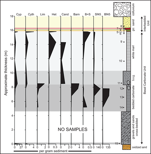 Microfossil results for the southern Bouse Formation at Marl Wash, Blythe basin. Stylized stratigraphic column on far right roughly corresponds to Stratigraphic Panel A20 in Homan (2014). Cyp—Cyprideis, Cyth—Cytheromorpha plotted as square root values to highlight low abundances throughout the section, Lim—Limnocythere plotted as square root values to highlight low abundances at the bottom of the section, Het—Heterocypris, Cand—Candona, Barn—barnacle shell fragments, B+S—fish bone and scale, Sf45—spiraled foraminifers in a concentrated aliquot of 45–120 µm residue (raw counts, not as per gram sediment), Bf45—biserial foraminifers in aliquot of 45–120 µm residue (raw counts, not as per gram sediment), b.o.g.—barnacle oncoid grainstone, grc—green and red claystone. Black diamonds with numbers—individual samples that correspond to data archived in the Data Repository (see text footnote 1). See Figure 1 for location and Supplemental Materials (footnote 1) for additional details about the sampling scheme.