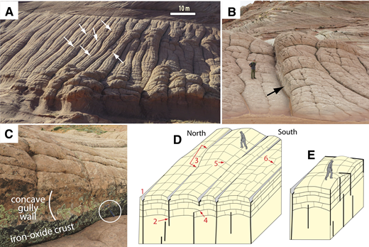 "Control of sheeting joints and runoff by a set of vertical tectonic joints at Buckskin Gulch, southern Utah. The upper surface of each ridge is an exposed sheeting joint; tectonic joints are marked with white arrows in A. (A) (37.046°N, 111.9916°W) Oblique view of loaf-like landforms developed on structureless sandstone cut by parallel, closely spaced tectonic joints. Note the sharp boundary between unjointed, cross-stratified rocks (uppermost part of image) and jointed, structureless rocks. (B) (37.04619722°N, 111.99138889°W) Joint-bounded parallel ridges; arrow points to the gullied joint shown in C. Location is several hundred meters north (to the left) of A. (C) (37.0465833°N, 111.991388°W) Downslope view of the southern, concave wall of an exhumed gully. Crusts composed of iron-oxide-cemented sandstone are present along the left (southern) margins of the vertical, tectonic (east-west) joints. Joints act as gutters for runoff. Southern walls with iron-oxide cements are more resistant to erosion, and commonly stand in strong relief. Rock hammer (circled) for scale. (D) Vertical, tectonic joints (1) control locations of gullies. When seen in two-dimensional vertical section, most sheeting joints terminate against vertical joints (2). Like other opening-mode joints, sheeting joints cannot propagate across a void. The three-dimensional shapes of exhumed sheeting joints suggest that while in the shallow subsurface, some sheeting joints bridged laterally adjacent, but discontinuous, vertical joints. As gullying increased relief, new sheeting joints dipped more steeply—parallel to the steep, gullied walls. The in-plan geometries of some sheeting joint terminations suggest that sheeting joints can ""jump"" the lateral span between adjacent en echelon tectonic joints (3). Sheeting joints terminate not only against vertical tectonic joints, but also against adjacent sheeting joints (4). Short, vertical cross-joints terminate against the sheeting joints; contour-parallel cross-joints terminate against earlier-formed, slope-parallel cross-joints. In some areas, the ladder-like, orthogonal pattern (5) is absent, and polygons dominate (6). (E) Orthogonal network of vertical, tectonic joints controls the shape of sheeting joints; best developed at the Durfey Mesa study site."