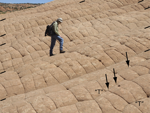 "Ladder-like pattern of joints at Buckskin Gulch, southern Utah (37.04619722°N, 111.99138889°W). Five slope-parallel tectonic joints (black lines at photo margins) control the overall geometry in this image; each of the six ridges is capped by a weathered sheeting joint. On a smaller scale, each convex-up sheeting joint is met by scores of short, vertical cross-joints. Slope-perpendicular cross-joints abut slope-parallel cross-joints, producing ""T"" junctions. Some cross-joints in this setting, however, meet at 120° angles (see Figs. 10, 11)."