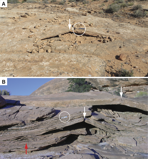 A-tents in Colorado Plateau sandstones outside the study area (Fig. 1). Arrows mark crests of structures. (A) A-tent in the Navajo Sandstone. Note freshly broken, angular pieces of sandstone surrounding the structure, and hammer (circled) for scale (southeastern Utah; trail to Little Rainbow Bridge; 38.5768°N, 109.6278°W, WGS 84; photo taken 3 June 2017). (B) (36.521432°N, 112.553692°W) A-tents (white arrows) and a blister (red arrow) in the Permian Esplanade Sandstone; scale bar (circled) is 15 cm long (below Sowats Point, Grand Canyon, Arizona).